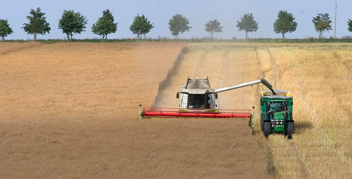 jordbruk_1
