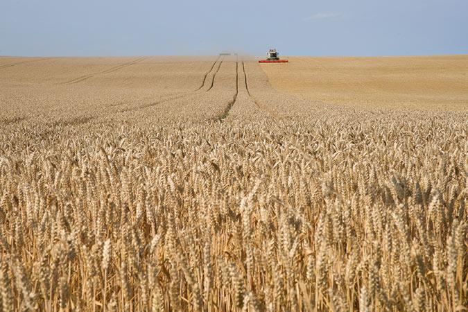 jordbruk_4